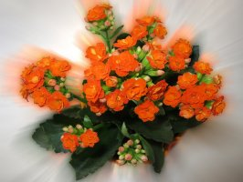 kwiaty online